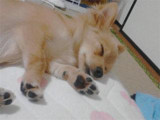 犬の小太郎